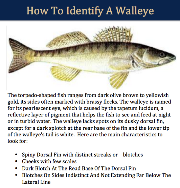 how to catch walleye in a river